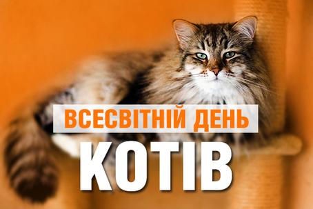 Творчий мікс «Киці-муркиці та котики-муркотики»